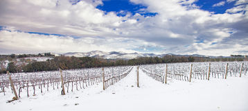 Vineyards rows covered by snow in winter. Chianti, Florence, Ita Royalty Free Stock Image
