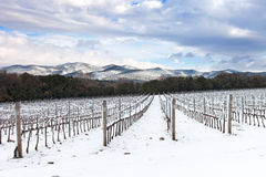 Vineyards rows covered by snow in winter. Chianti, Florence, Italy. Vineyards rows covered by snow in winter. Chianti countryside, Florence, Tuscany region stock image