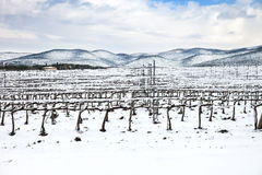 Vineyards rows covered by snow in winter. Chianti, Florence, Italy Royalty Free Stock Images