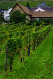 The vineyards of Rudesheim Royalty Free Stock Images