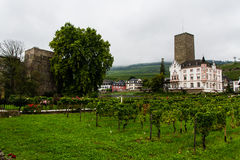 The vineyards of Rudesheim Royalty Free Stock Photos