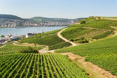 Vineyards in Rudesheim am Rhein Royalty Free Stock Photo