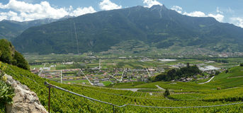 The vineyards of saillon switzerland Royalty Free Stock Photo