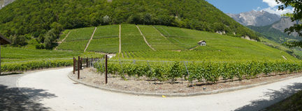 The vineyards of saillon switzerland Stock Image