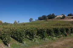 Vineyards in Saint Emilion Royalty Free Stock Image