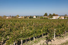 Vineyards in Saint Emilion. In the Gironde, Aquitaine, France Stock Photography