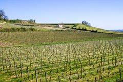 Vineyards in Saint Emilion, Bordeaux, France Royalty Free Stock Images