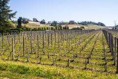 Vineyards in Saint Emilion, Bordeaux, France Stock Photos
