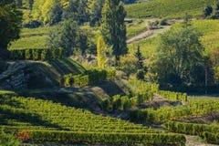 Vineyards of Saint Emilion, Bordeaux Vineyards, terraced vineyard. Gironde, France stock image