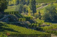 Vineyards of Saint Emilion, Bordeaux Vineyards, terraced vineyard. Gironde, France stock photo