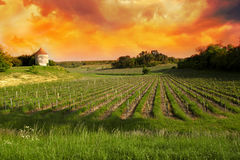 Vineyards of Saint Emilion, Bordeaux Vineyards Royalty Free Stock Image