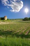 Vineyards of Saint Emilion, Bordeaux Vineyards Stock Photos