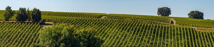 Vineyards of Saint Emilion, Bordeaux Vineyards, terraced vineyard. Gironde, France stock photography