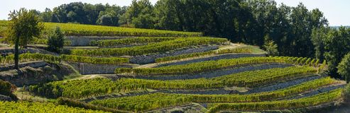 Vineyards of Saint Emilion, Bordeaux Vineyards, terraced vineyard. Gironde, France royalty free stock photo