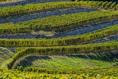 Vineyards of Saint Emilion, Bordeaux Vineyards, terraced vineyard. Gironde, France royalty free stock photos