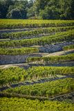 Vineyards of Saint Emilion, Bordeaux Vineyards, terraced vineyard. Gironde, France royalty free stock images