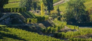 Vineyards of Saint Emilion, Bordeaux Vineyards, terraced vineyard. Gironde, France royalty free stock image