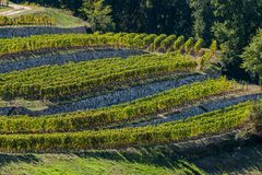 Vineyards of Saint Emilion, Bordeaux Vineyards, terraced vineyard. Gironde, France stock photos