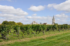 Vineyards at Saint-Emilion (France) Stock Images