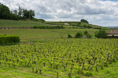 Vineyards of Saint-Emilion. One of the main red wine production areas of Bordeaux region, France royalty free stock image