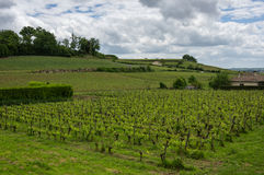Vineyards of Saint-Emilion. One of the main red wine production areas of Bordeaux region, France royalty free stock images