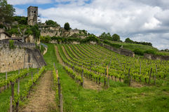 Vineyards of Saint-Emilion. One of the main red wine production areas of Bordeaux region, France royalty free stock photos