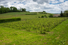 Vineyards of Saint-Emilion. One of the main red wine production areas of Bordeaux region, France royalty free stock photo