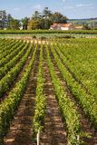 Vineyards of Saint Emilion, sunny day Stock Photo