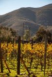 Vineyards in San Antonio de las Minas, Ensenada, Baja california, Mexico stock photo