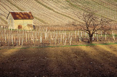 Vineyards in Savoy, France Royalty Free Stock Photos
