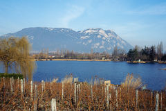 Vineyards in Savoy and lake, France Stock Image
