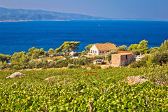 Vineyards by the sea on Brac island Stock Photography