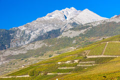 Vineyards in Sion region Royalty Free Stock Photo