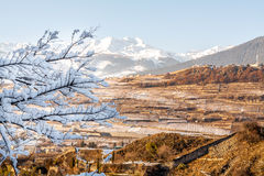 Vineyards of Sion in Switzerland, panoramic view. View from mountain to vineyards of Sion, Switzerland Stock Photo