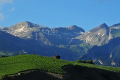 Vineyards and Ski Slopes. Vineyards at Sion in Switzerland, and in the background the ski slopes of Crans Montana in the Bernese Alps Stock Photography