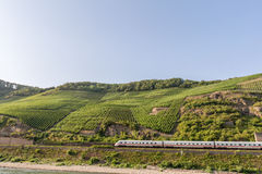 Vineyards on slopes of  Bopparder Hamm over the Rhine Valley, Germany as a fast train passes below. Royalty Free Stock Images