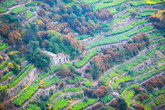 Vineyards on the slopes of the Cinque Terre Reserve, in Italy, Europe royalty free stock photography