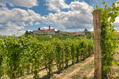 Vineyards and small town. Italy. Royalty Free Stock Photo