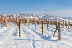 Vineyards on the snow in Italy. Royalty Free Stock Photography