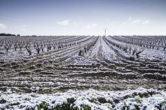 Vineyards snowfall Royalty Free Stock Photography