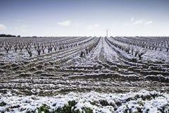 Vineyards snowfall Royalty Free Stock Photography