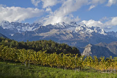 Vineyards before snowy Brenta Royalty Free Stock Images