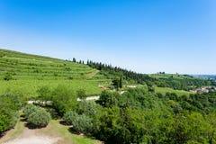 Vineyards from Soave.Italian wine. Royalty Free Stock Photos