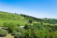 Vineyards from Soave.Italian wine. Stock Photo