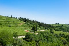Vineyards from Soave.Italian wine. Royalty Free Stock Image