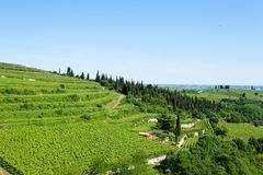 Vineyards from Soave.Italian wine. Stock Images