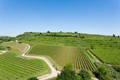 Vineyards from Soave.Italian wine. Stock Image