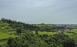 Vineyards of the Soave region Italy stock images