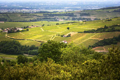 Vineyards of Solutré village, Bourgogne, France Stock Photo