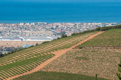 Vineyards with Somerset West and Gordons Bay in the back Royalty Free Stock Photography